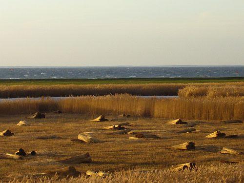 Die Ostsee mit Feldern bei der Schilfernte auf der Halbinsel Mönchgut